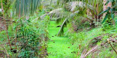 3 Landscape Design Tips to Improve Your Yard's Drainage, Ewa, Hawaii