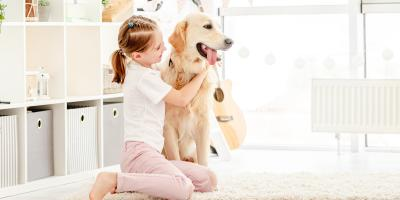 3 Tips for Maintaining an HVAC System with Pets in the House, Manlius, New York