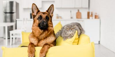 Should I Leave My Air Conditioning System on for My Pets?, Brooklyn, New York