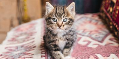 4 Tips for Naming Your New Kitten, Foley, Alabama