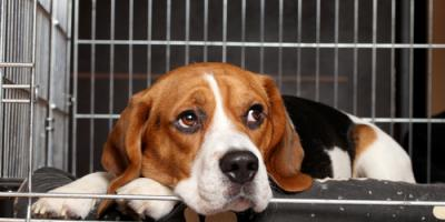 What to Look for in a Dog or Pet Boarding Facility, Gulf Shores, Alabama