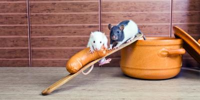 Rat Control Service Offers 3 Tips to Keep Rodents Away From Your Home, Dothan, Alabama
