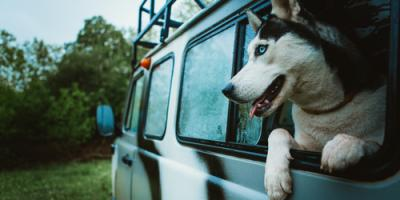 3 Tips for Moving With Your Pets, Robertsdale, Alabama