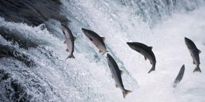 Do You Ever Feel Like a Salmon?, Sedalia, Colorado