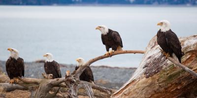 Environmental Laboratory Expert Explains Recognizing & Reporting Environmental Hazards, Anchorage, Alaska