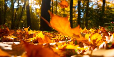 3 DIY Gutter Cleaning Tips to Get You Through Fall, Vernon, New Jersey