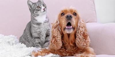 3 Common Types of Pet Allergies Everyone Should Know About, Omaha, Nebraska