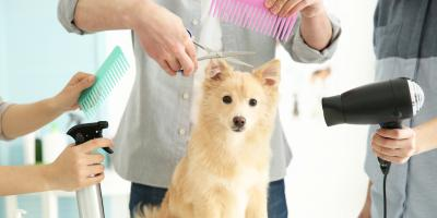 5 Benefits of Having Your Dog Groomed, 4, Tennessee