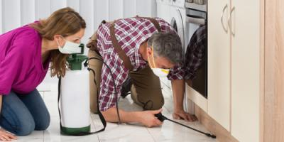 4 FAQs About Pest Control, Kahului, Hawaii