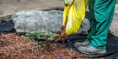 The Differences Between Bark & Compost Mulch, Altadena, California