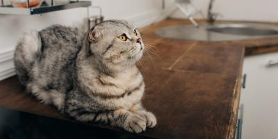 How Pets Affect Your Home's Cleanliness, Anchorage, Alaska