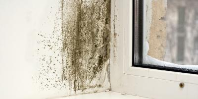 When Do You Need Mold Removal?, ,