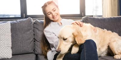 5 Tips for Maintaining a Clean Carpet as a Dog Owner, Anchorage, Alaska