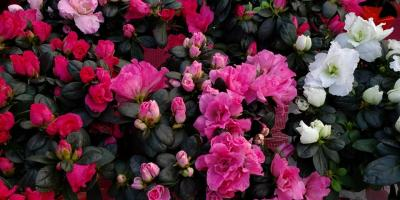 Valentine's Day Flowers & House Plants for Sale, Anchorage, Alaska