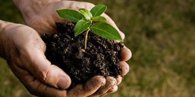 Exploring the Benefits of an Organic Soil Mix, Anchorage, Alaska