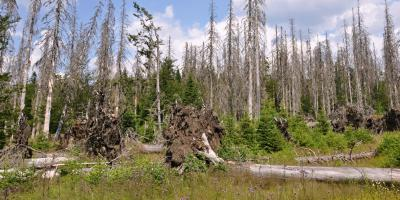A Guide to Bark Beetles' Effects on Your Trees, Anchorage, Alaska