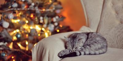 5 Ways to Cat-Proof Your Christmas Tree, Ewa, Hawaii