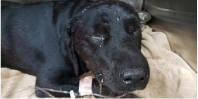 A Happy Ending for Our Sweet Morgan, Foley, Alabama
