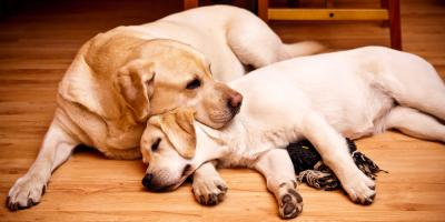 An Animal Clinic Answers FAQs About Spaying & Neutering, Bolivar, Missouri