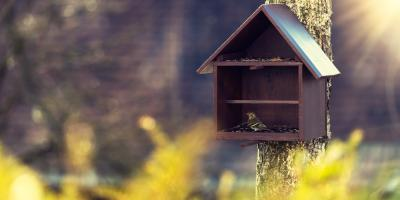Animal Control: How to Keep Pests Out of Your Bird Feeders, New Milford, Connecticut