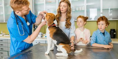 Waynesboro Veterinarian Shares Important Facts About Pet Health Insurance, Waynesboro, Virginia