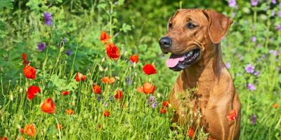 Keep These 3 Flowers Out of Your Garden If You Have Pets, Avon, New York