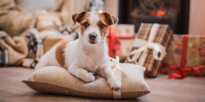 3 Pet Safety Tips for the Holidays, Elkton, Maryland