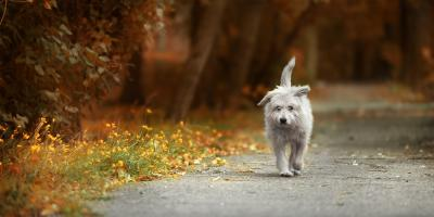 What to Do When Your Pet Is Lost, ,