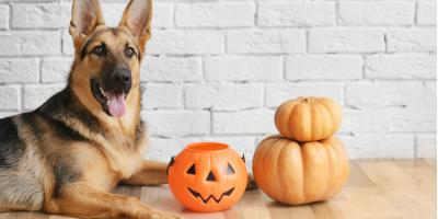 5 Pet Safety Tips for Halloween, Lincoln, Nebraska