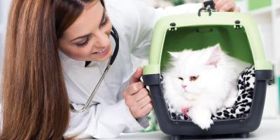 Local Animal Hospital Explains the Importance of Annual Vet Visits, Amsterdam, Virginia