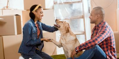 5 Animal Care Tips for Transitioning to a New Home, Elk Grove, California