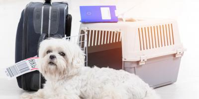 5 Helpful Tips For Taking Your Pet on a Plane, Manhattan, New York