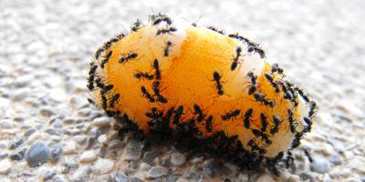 4 Summertime Pest Control Tips, Rochester, New York