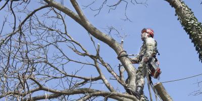 Athens Arborist Shares the Dangers of DIY Tree Care, Jefferson, Georgia