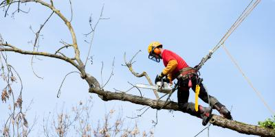 A Guide to Hiring a Certified Arborist Before Buying a Home, Cincinnati, Ohio