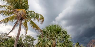 How to Check Your Trees After a Major Storm, Hilo, Hawaii