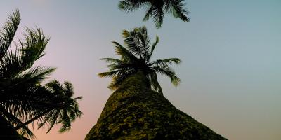 3 Ways to Spot a Hazardous Tree, Hilo, Hawaii