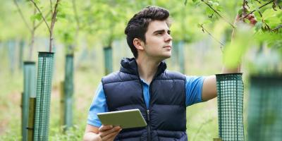 3 Reasons to Hire an Arborist to Care for Your Trees, Lilburn, Georgia