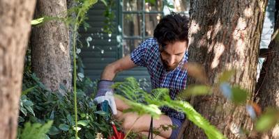 A Homeowner's Checklist for Spring Tree Care , Oak Ridge, North Carolina