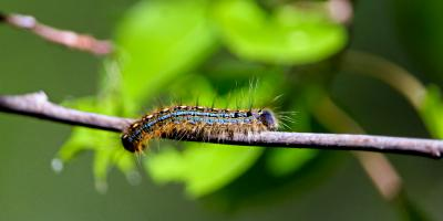 5 Tree-Threatening Insects Found in Georgia, Baldwin, Georgia