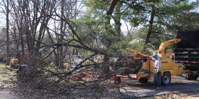 Frequently Asked Questions About Dead Tree Removal, St. Charles, Missouri