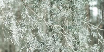Arborist Shares 3 Reasons Winter Tree Inspections Are Crucial, Baldwin, Georgia