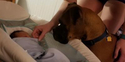 3 Ways to Prepare Your Dog for a New Baby, Lincoln, Nebraska