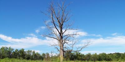 Austin's Tree Removal Experts on the Dangers of Having Dead Trees on Your Property, Austin, Texas