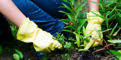 4 Reasons Your Garden Has Weeds, Austinburg, Ohio