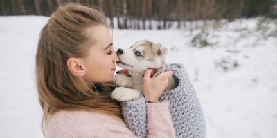 A Guide to Pet Wellness & Safety In the Winter, Avon, New York
