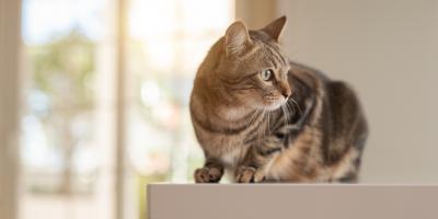 Why Do Cats Spray Around the Home?, Avon, New York