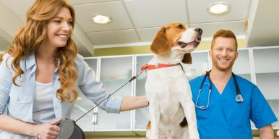 5 Tips to Ease Your Pet's Anxiety at the Veterinarian's Office, Avon, New York