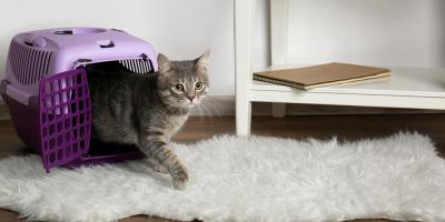 Guide to Giving Your Cat a Stress-Free Veterinarian Appointment, Avon, Ohio