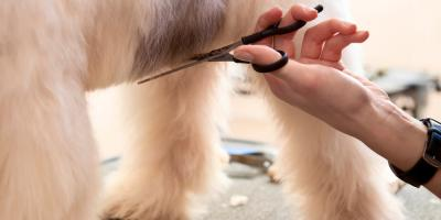 3 Benefits of Professional Pet Grooming, Avon, Ohio